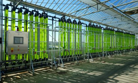 Microalgas podem desempenhar um papel crucial na economia circular