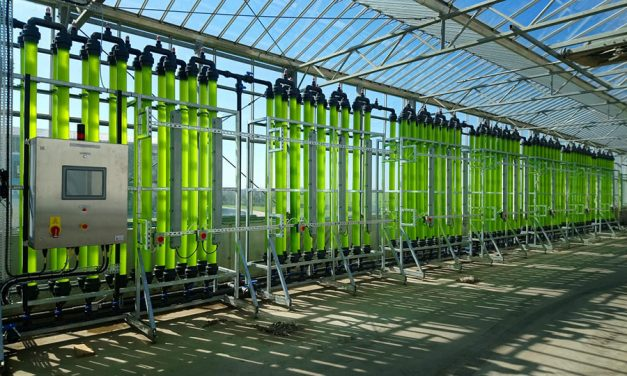 Microalgae Could Play Crucial Role in Circular Economy
