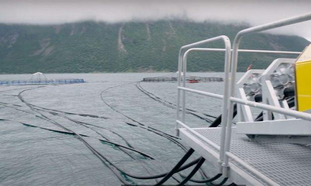 Algae's Advancing Role in Aquaculture