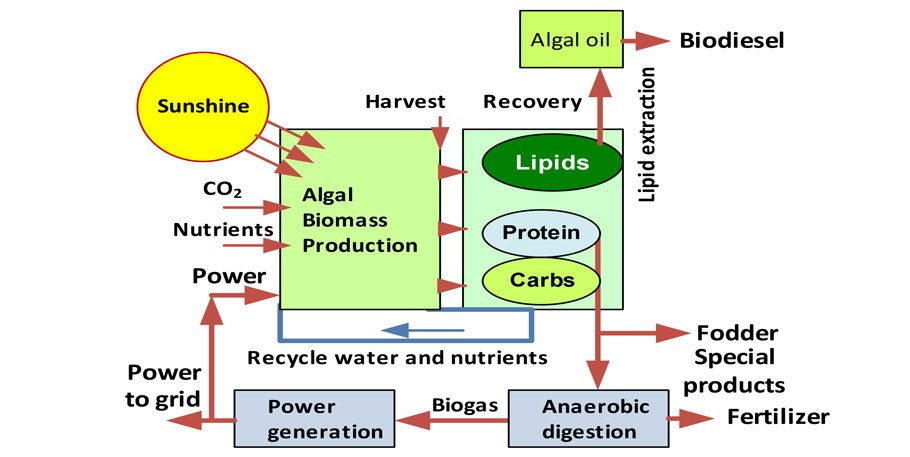 Algaculture production system