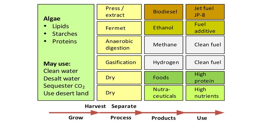 Algal Components, Products and Uses