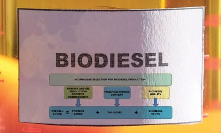 Selecting the Best Microalgae for Biodiesel Production