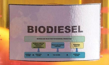 为生物柴油生产选择最佳微藻