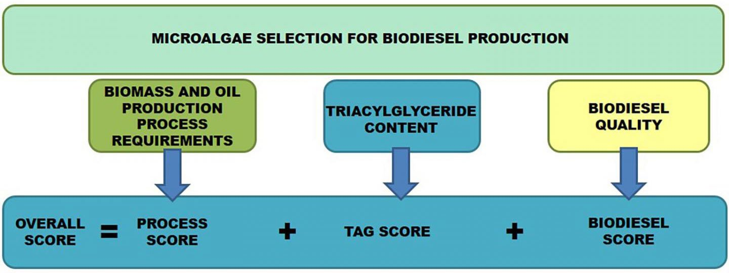 Best Biodiesel diagram