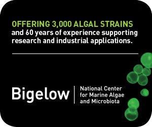 NCMA/Bigelow