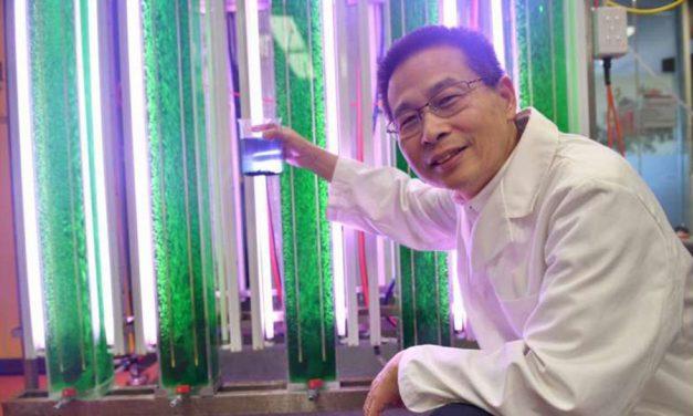 Making Protein Superfood from Marine Algae