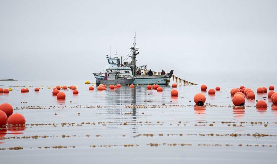 Seagrove Kelp Co.
