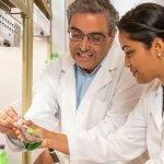 Exploring Light-harvesting Antenna in Cyanobacteria