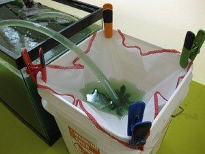 Harvesting Spirulina with a cloth filter
