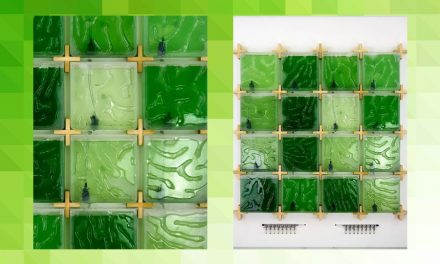 The Coral: a New Approach to Home Algae Farming