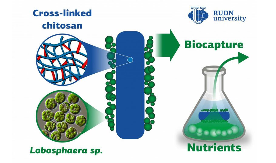 Biocapture from Wastewater