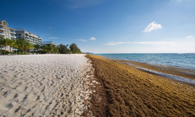 Seaweed from Beaches can Power Hotels