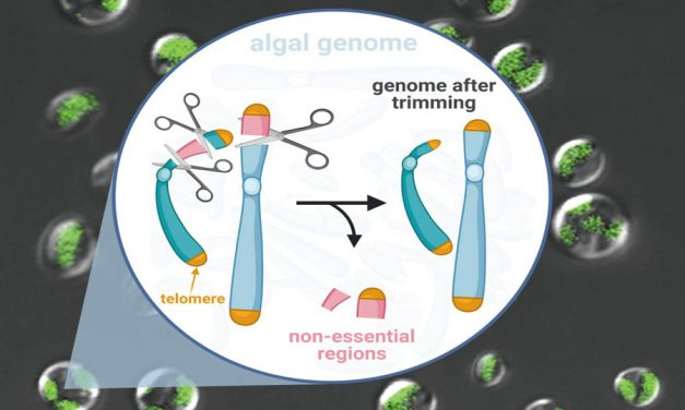 Genome Scalpel More Efficiently Turns CO2into Biofuel
