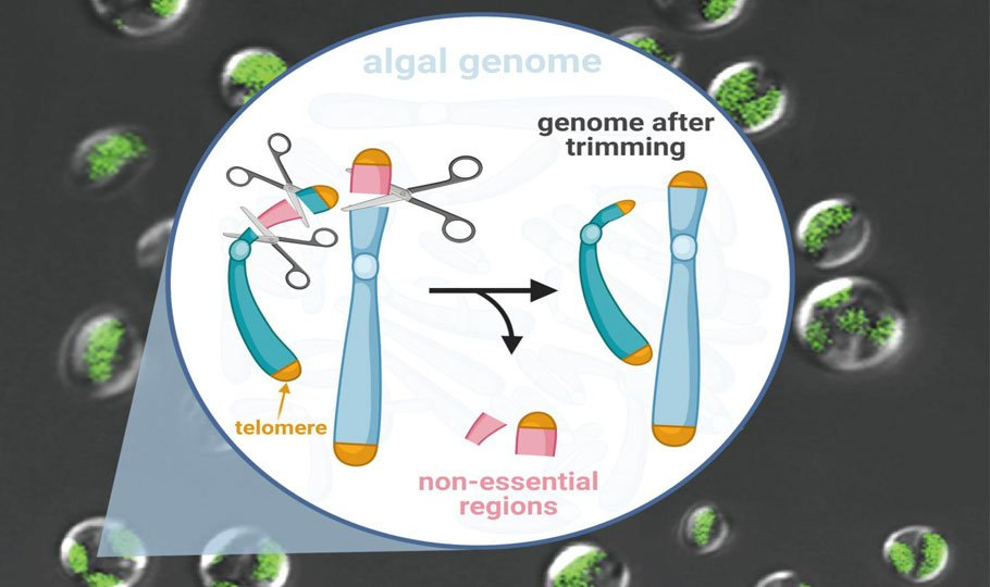 Genome Scalpel