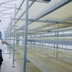 Swedish Algae Factory Engineers Diatoms