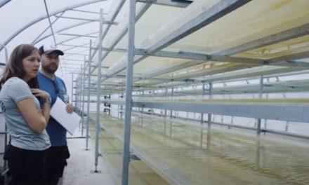 瑞典藻类工厂工程师硅藻