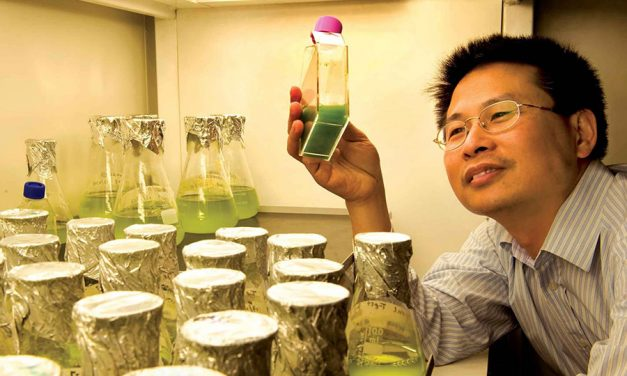Mining for Marine Bioproducts in Australia