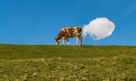 An Update on Cows, Red Seaweed and Methane Emissions