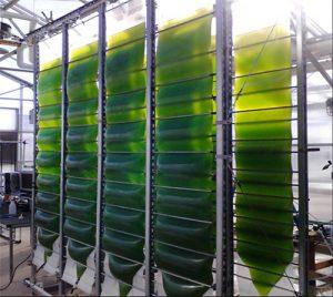 Air Accordion Photobioreactor