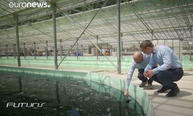 Camporosso Shows the Benefits of Algae in Wastewater Treatment