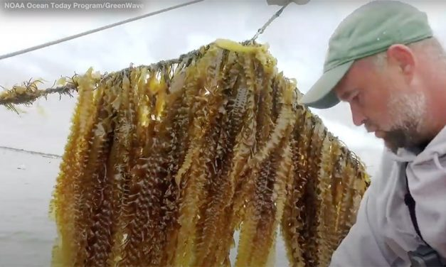 Why Demand for Seaweed is Luring Farmers