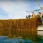 U.S. Kelp Farming Industry Gets $100 Million Boost