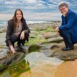 Healing Wounds with Seaweed Bioinks