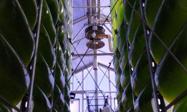 AlgaeCell Licenties University of Arizona Algen PBR