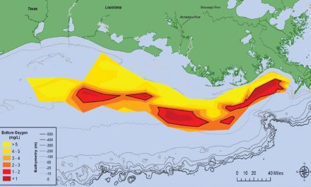 """La soluzione delle alghe alle """"zone morte"""" costiere"""