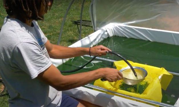 Coltivare la Spirulina all'aperto a casa