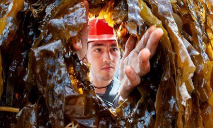 Funding Boost for Seaweed Nursery in Scotland