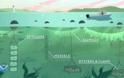 3D Ocean Farming for Sustainability