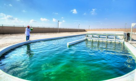 Qatar U. and ExxonMobile Advance Algal Wastewater Treatment