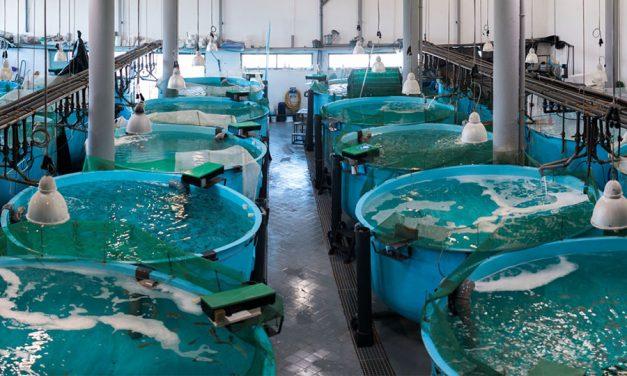 Seminário on-line sobre algas para alimentos aquáticos