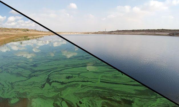 BlueGreen Water Technologies curando FAN en lagos