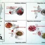 Los científicos estudian los efectos protectores de las algas rojas