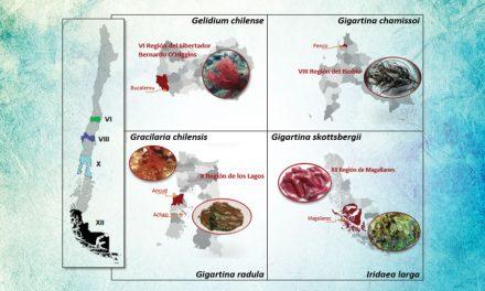 Cientistas estudam os efeitos protetores das algas vermelhas