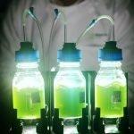 Desbloqueo del chasis de expresión de Algae mediante biología sintética