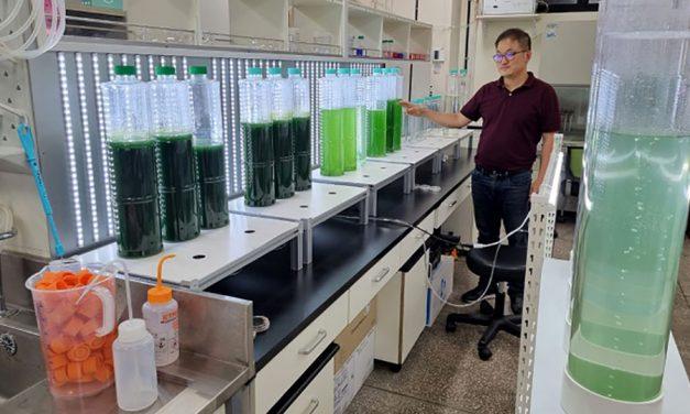 Koolstofaanzuiging Culturen Spirulina met CO2