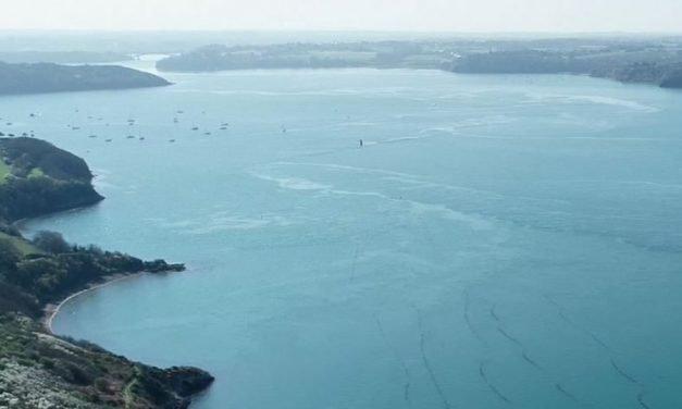 GENIALG apresenta resultados de pesquisas com algas marinhas