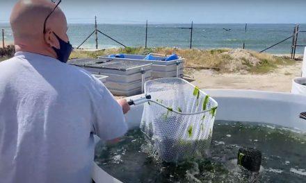 Sustainable Algae Mariculture