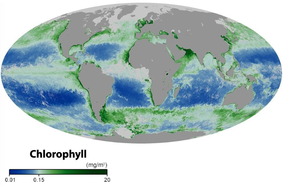 Map of Chlorophyll
