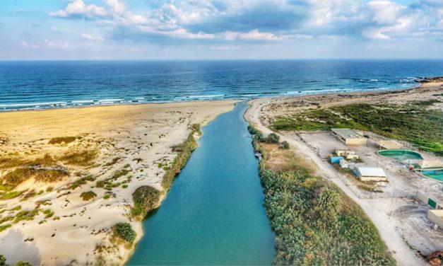 Fazendas de algas em estuários de rios reduzem as concentrações de nitrogênio