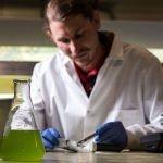 Mit Algen das Virus bekämpfen
