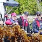 Cascadia Algen zur Untersuchung der Auswirkungen von Seetang auf Lachs