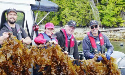 Cascadia Seaweed para estudar os efeitos dos leitos de kelp no salmão