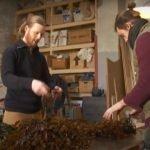 Alga marinha cria móveis sustentáveis