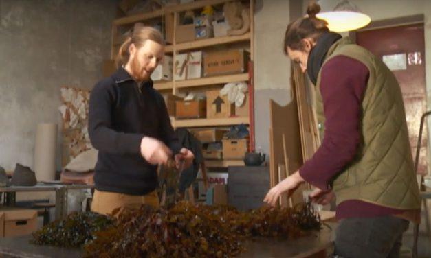 Las algas marinas crean muebles sostenibles