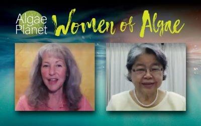 Mulheres das Algas, Entrevista com Jiamjit Boonsom da Boonsom Farm Spirulina