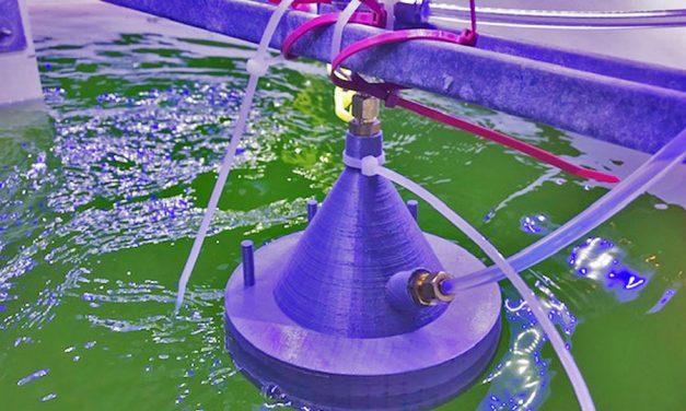 Neue Technologie erkennt die Gesundheit von Algenkulturen